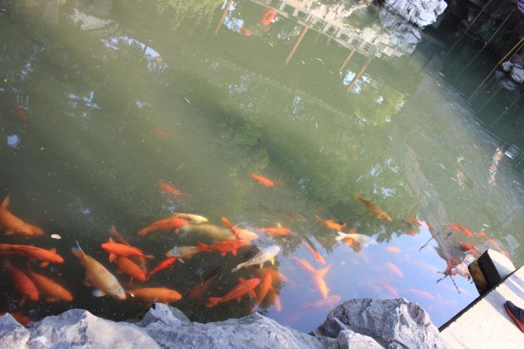 Yuyuan Garden 3