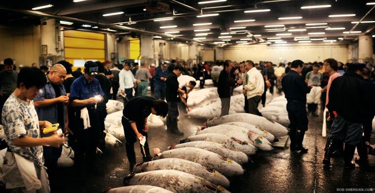 tuna_auction