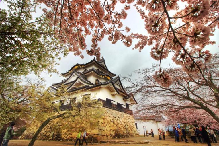 Castelul din Hikone, ascuns printre flori de ciresi