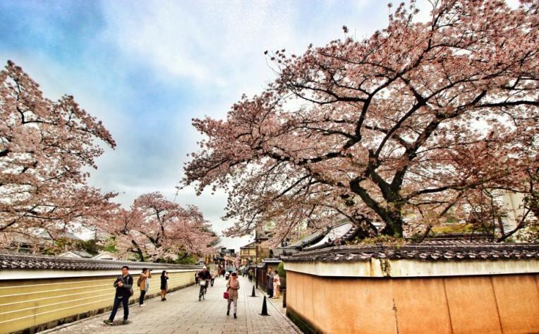 Strada plina de ciresi, la iesire din cartierul GIon, Kyoto