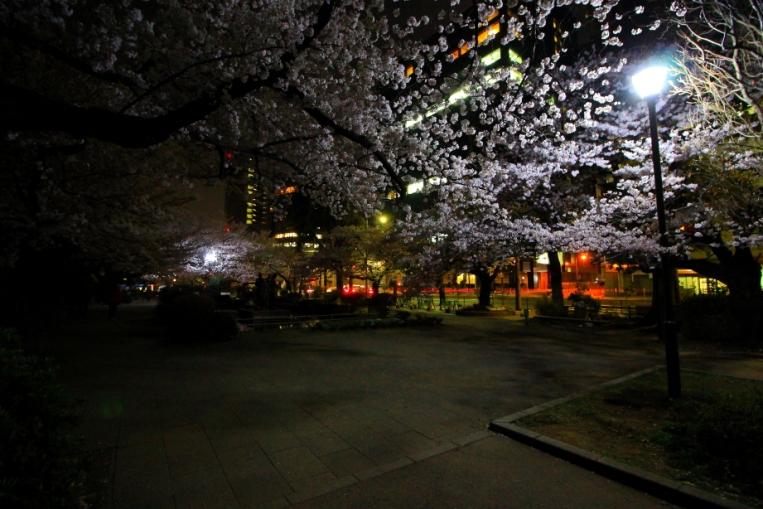 Parcul Chidorida Fuchi din Tokyo, impanzit de ciresi infloriti. Privelistea era dementiala, din pacate nu am putut surprinde imaginea intocmai