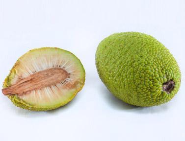 Sursa: http://www.vegaproduce.com/product/bread-fruit