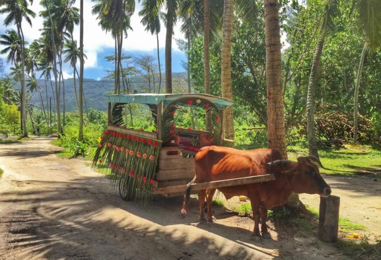 Mijloc de transport in comun :)