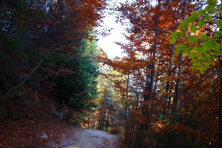 Drumul forestier dintre Pestera si Magura