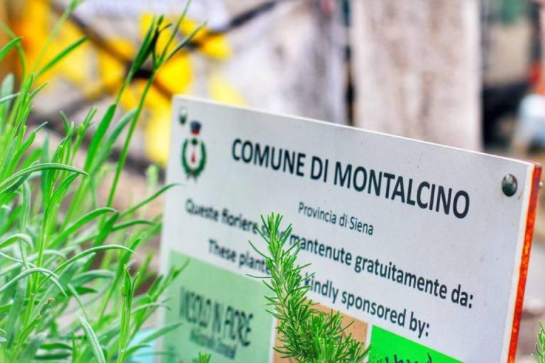 Montalcino 11