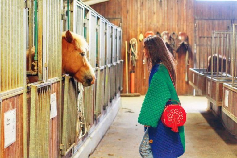 Fakasel Icelandic Horses