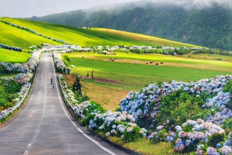 Hydrangeas Sao Miguel Azores 3