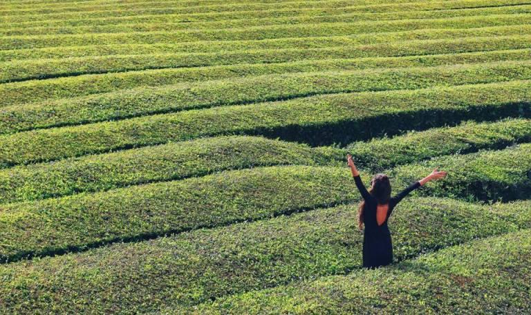 cha-gorreana-tea-plantation-azores-sao-miguel-2