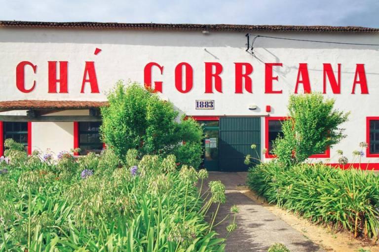 cha-gorreana-tea-plantation-azores-sao-miguel-3