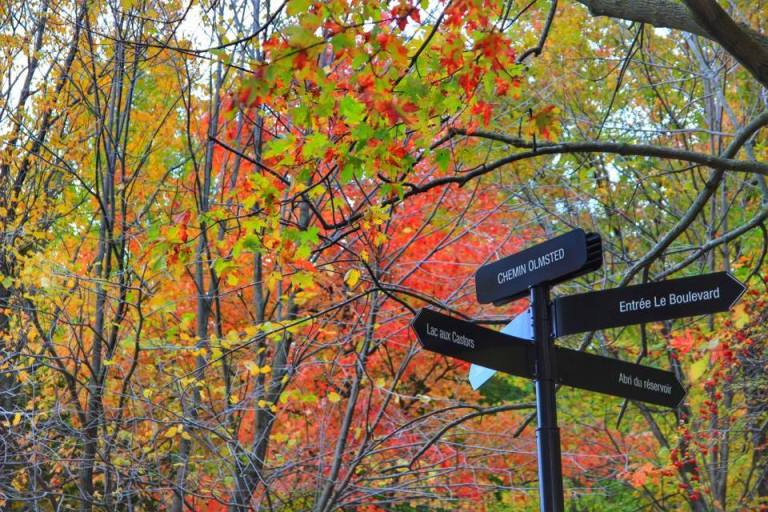 montreal_leaf-peeping