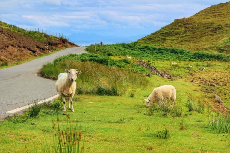 scotland-road-trip-13