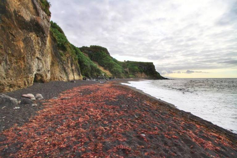 viola-beach-sao-miguel-azores-6