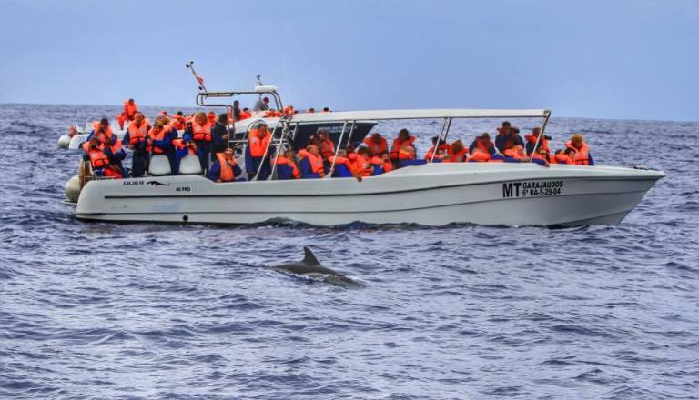 whale-watching-azores-sao-miguel-2