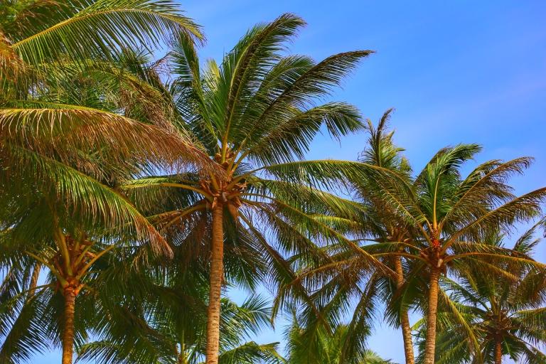 mirissa-beach_sri-lanka_2