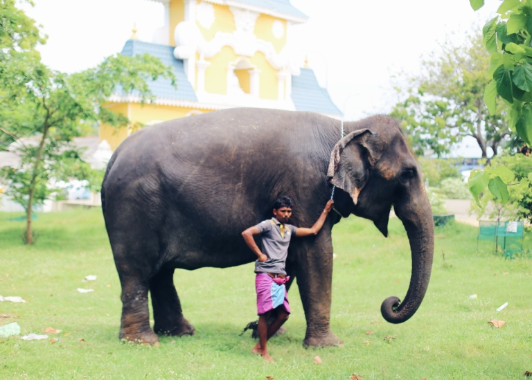 sri-lanka_day-3_elephant-ride_dondra-lighthouse_1