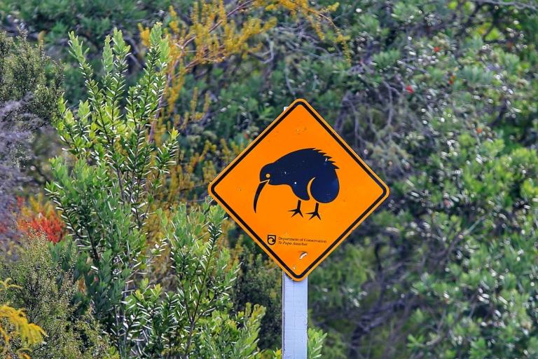 Roadtrip Turangi-Tongariro-Ruapehu_6