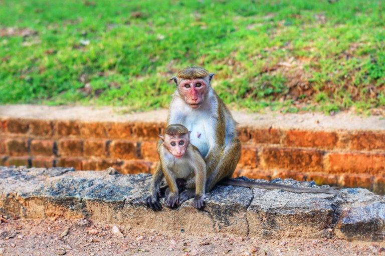 Sri Lanka_Sigiriya_Monkeys_2