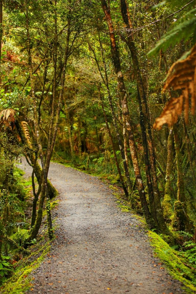 To Lake Matheson_New Zealand_1
