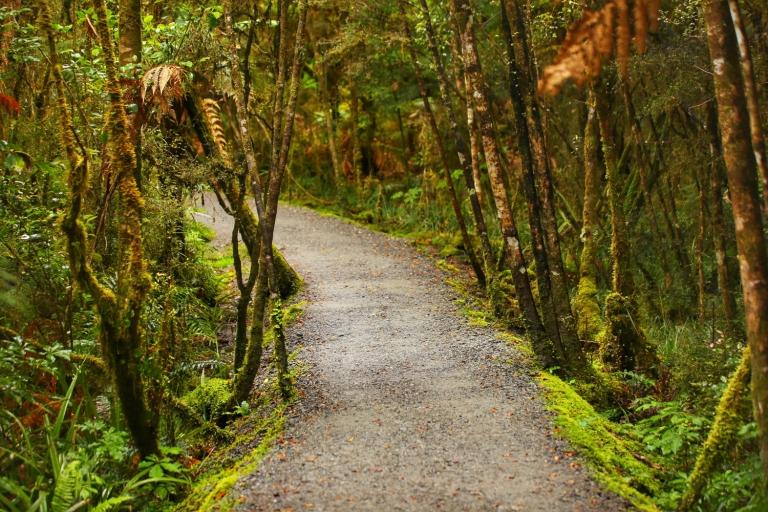 To Lake Matheson_New Zealand_2