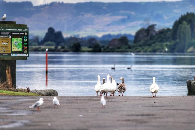 Rotorua_New Zealand_4